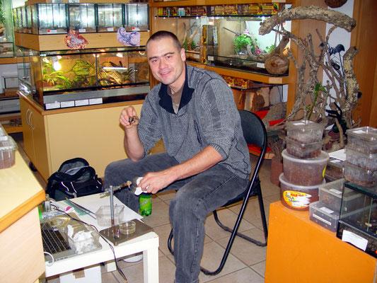 Alle Jahre wieder: Dr. Volker Herzig (Australien) beim Spinnen melken.