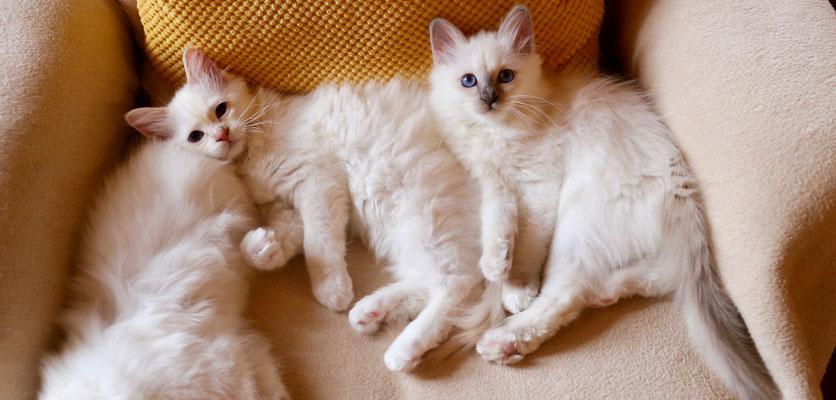 Leo und Louis von Bodhgaya