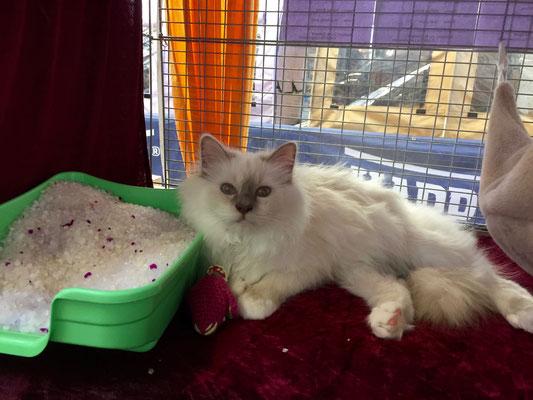 Eshana liegt ganz entspannt im Käfig.