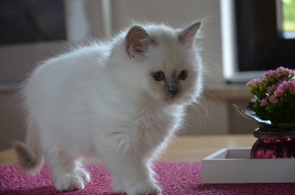 Yoschi 11 Wochen alt