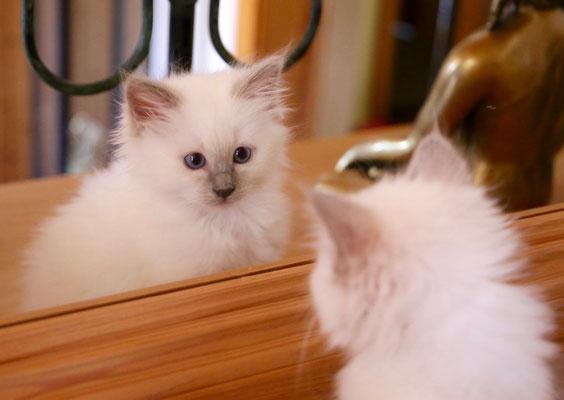 Dharti sieht sich im Spiegel! Wer bist du denn?