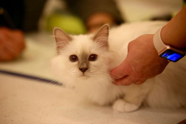 Geschafft! Eshana ist Kittenchampion geworden!