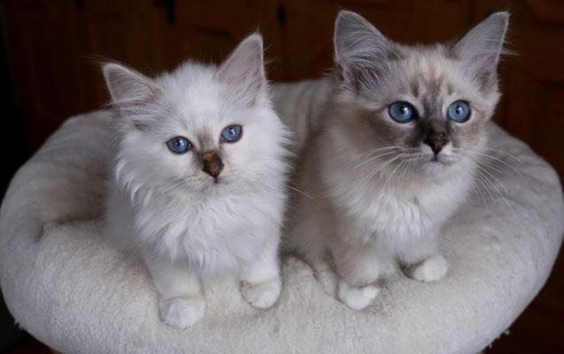 Kitty und Kalida