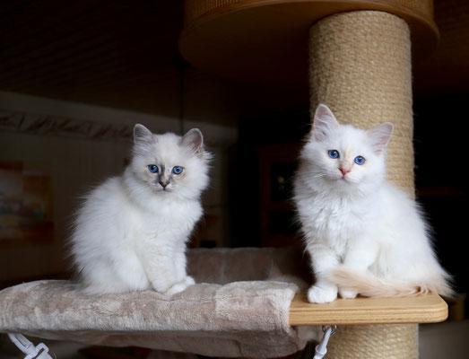 Luna und Leo von Bodhgaya