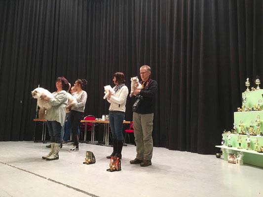 Die Sieger Best in Show Kategorie Halblanghaar.