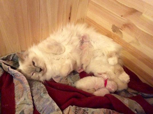 Mama Willow liegt glücklich mit ihren Babys in ihrer Wurfkiste