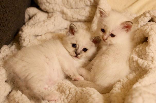 Luna und Lilly von Bodhgaya