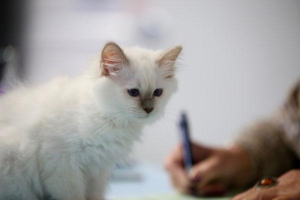 Eshana schaut ihr völlig entspannt beim Schreiben zu.