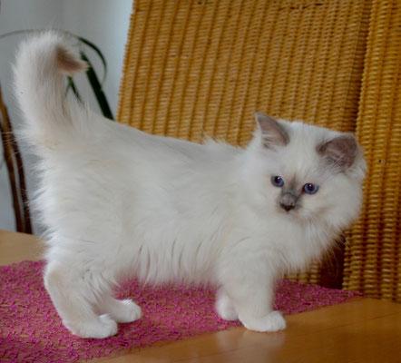Yoschi ist 14 Wochen alt