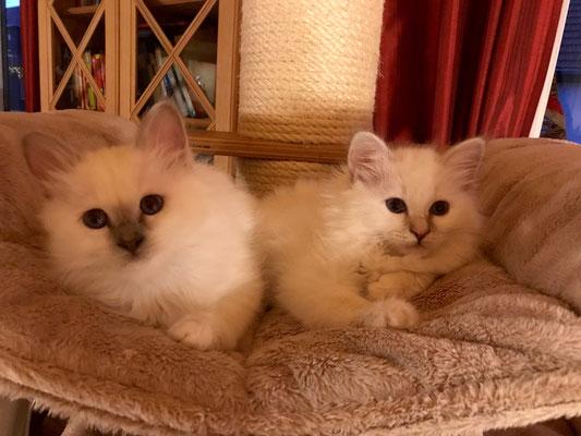Louis und Lilly von Bodhgaya