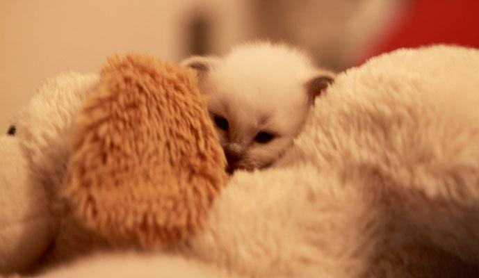 Der Teddy ist fast so weich wie Mami.