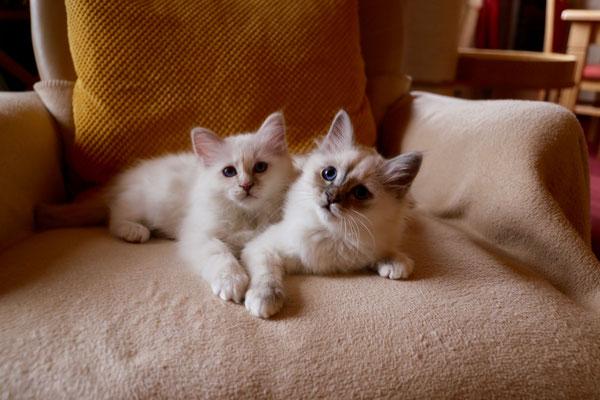 Lilly und Luna von Bodhgaya