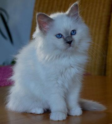 Yoschi ist 12 Wochen alt