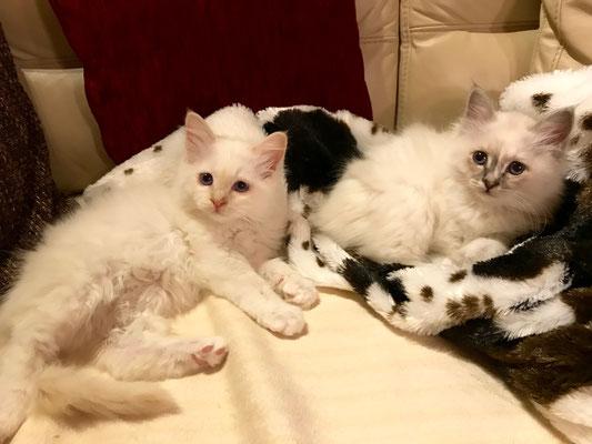 Leo und Luna von Bodhgaya