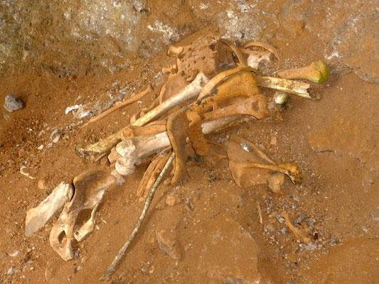Restos de huesos en Cerro del Tigre