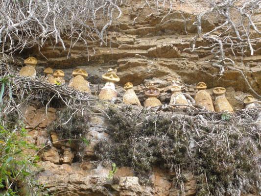 Sarcofagos del Cerro del Tigre