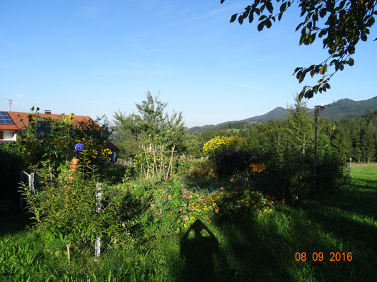 Lenis farbenfroher Bauerngarten...