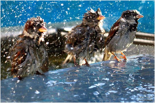 """Spatzenbad (Bestes Digital """"Fauna/Flora"""" 2006)"""