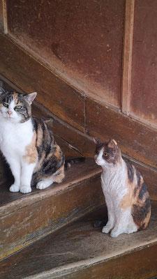 Katze - Claudia Schürch