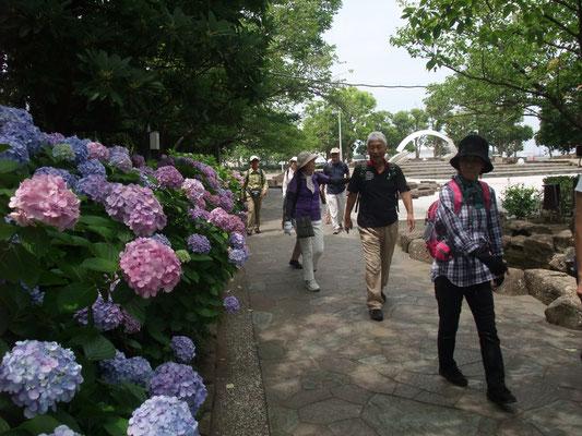 紫陽花が咲くせせらぎの小路をとおり