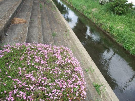 大田橋を渡り、中原豊田道にもどる。