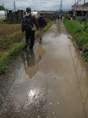 水たまりの農道もまた良きかな