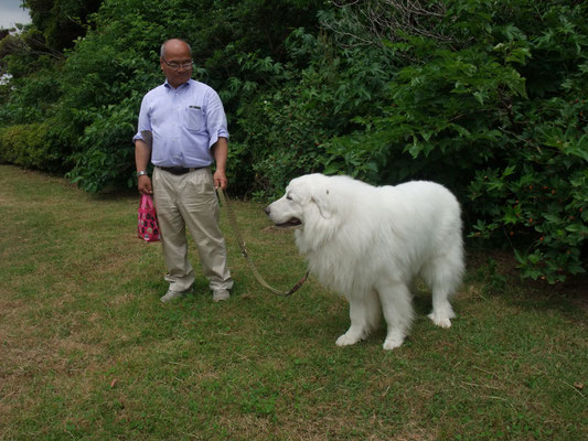 広場で見かけた白熊?  おとなしい牧羊犬だそうです