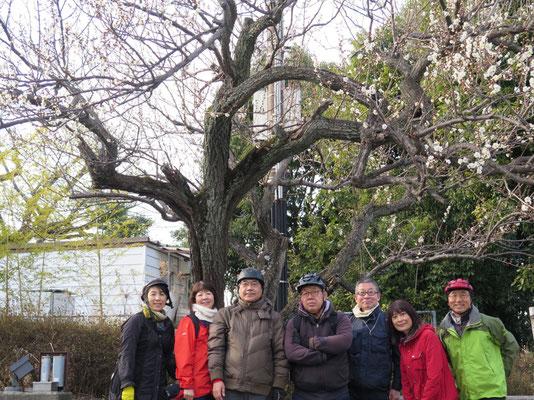 梅の里センター 白梅の木