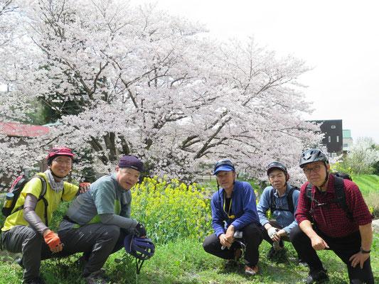 二宮・渡邊商店裏庭の桜を対岸から