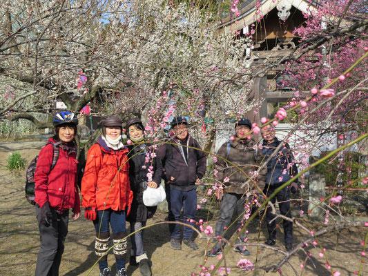 瑞雲寺境内の梅