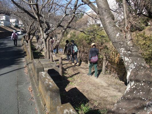 桜並木は春には素晴らしい