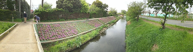 西川橋で渋田川から西に分かれる。