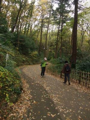 クヌギ・コナラの林