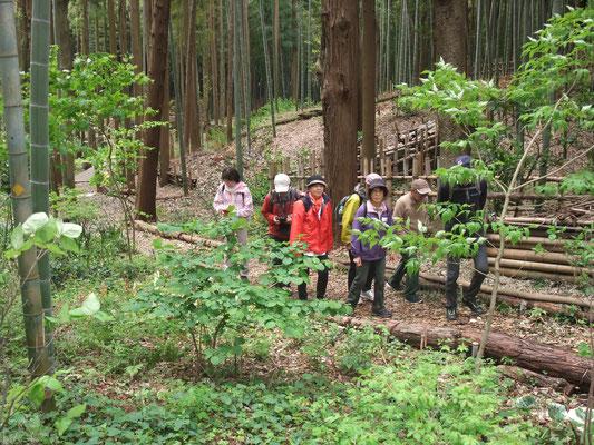 林間の散策路