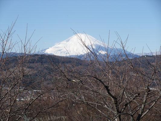 林を抜けると紺碧の空の下、富士山が