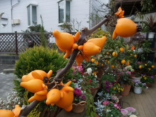 花屋さんで見たフォックスフェイス(和製英語)英語ではニップルフルーツという茄子の一種。観賞用で食べられないそうです。