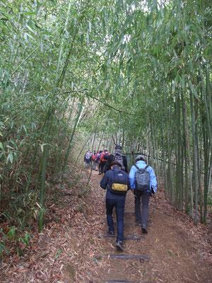 竹林の上り