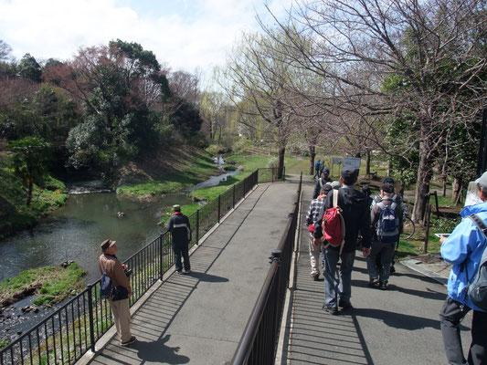 いたち川支流を離れ、山手学院前からいたち川本流に出て川を下る