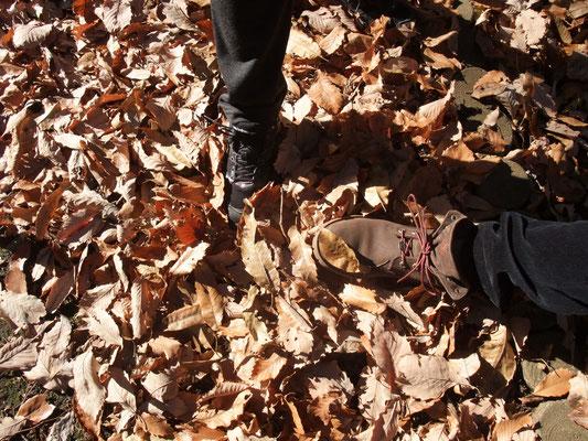 落葉の道を歩く