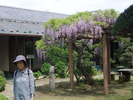 境内の藤の花