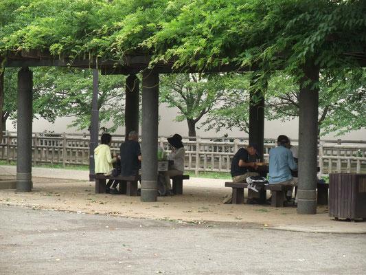 公園内の藤棚で昼食