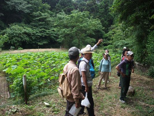 谷戸の最奥の蓮池に到着・・指さす上は新林公園の林道