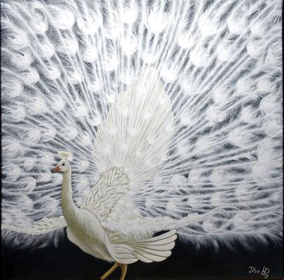 Weißer Pfau; 60x 60cm; Acryl auf Leinwand