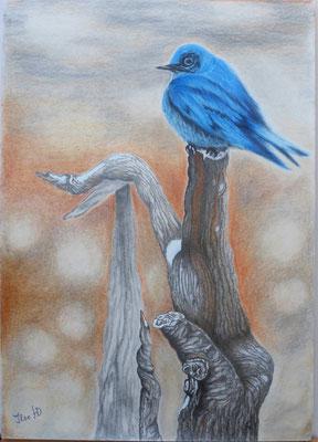 Eisvogel; Übung mit Polychromos auf Zeichenpapier; 30x 42cm
