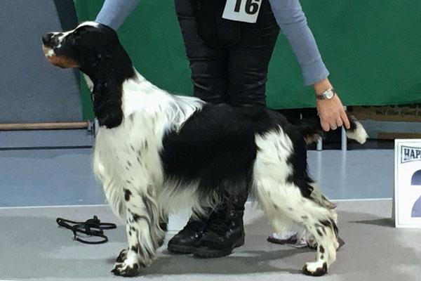 Hopper - Bester Jugendhund der Rasse