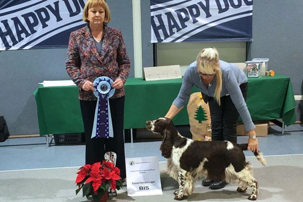 Charmin - Bester Hund der Schau 2013, 2016 & 2017