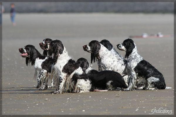 Die Truppe wartet, während Milo schwimmen lernt