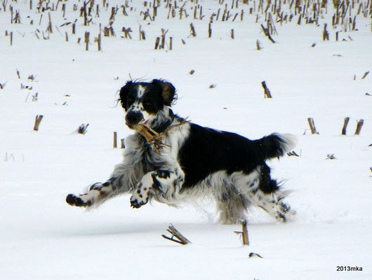 Baxter (Bandit)