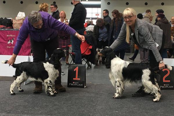 Hermine - Beste Jugendhündin & Hopper - Bester Jugendhund der Rasse