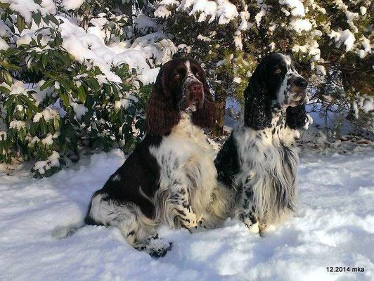 Dempsey & Baxter (Bandit)